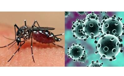 Kháng thể sốt xuất huyết Dengue giúp cơ thể chống lại SARS-CoV-2 ?