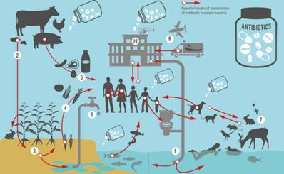 7 biện pháp hành động để ngăn chặn vi khuẩn kháng thuốc